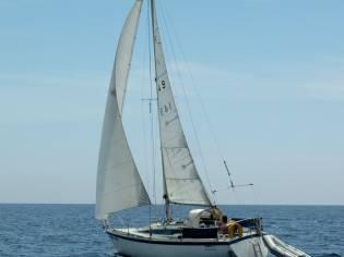 Aloa marine 27